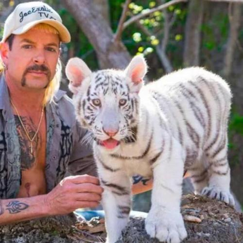 «Au Royaume des fauves» (Netflix): Joe Exotic, gracié par Donald Trump?